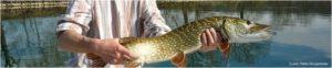fischen schweiz